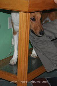 Anxious Dog Hiding